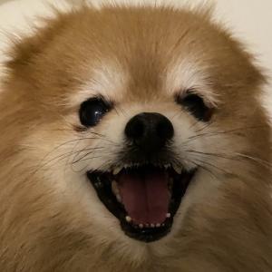 おひとりさま、愛犬との生活が好き