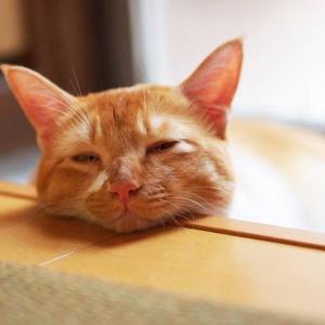 寝不足が原因でおこる心身へのリスク!