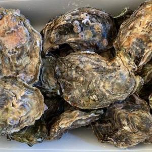 海のミルクと呼ばれる牡蠣は栄養満点!亜鉛の効果が優れている!