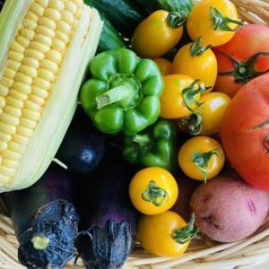 夏だからこそ夏野菜!栄養価が高くおいしくて安い!