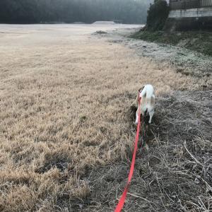 多頭飼育崩壊の保護犬と出会う