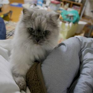 昔、居た猫の話。続き。