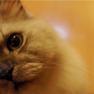 昔、居た猫の話、続きの続き。