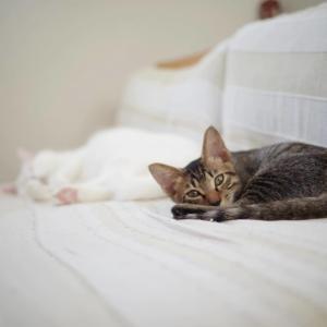 猫との生活は楽しい
