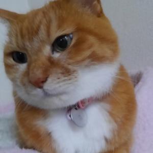 ご長寿ネコのふくですニャ!
