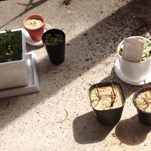 植物との生活⑥