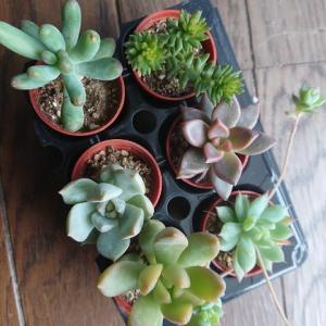 植物との生活⑦
