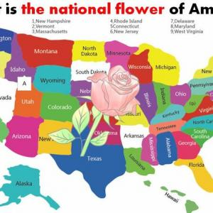 What is the national flower of America?