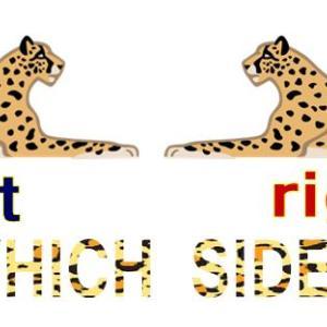 ヒョウの斑点はどちら側が多い?