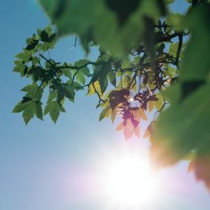 夏だって日焼けしたくない!着物や浴衣の時の紫外線対策!