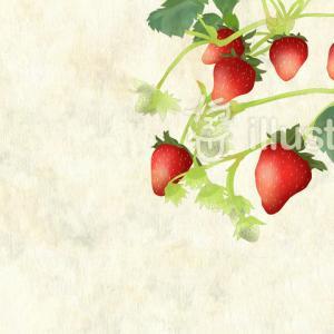 フレッシュイチゴ:フリーイラスト素材