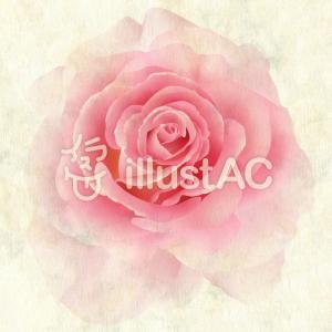 【フリーイラスト素材】お花・ピンクの薔薇(3タイプ)