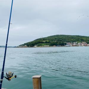 筏チヌ釣り