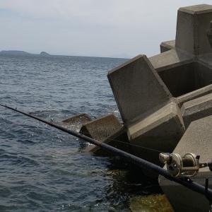 長崎県鷹島沖テトラポッドの石鯛