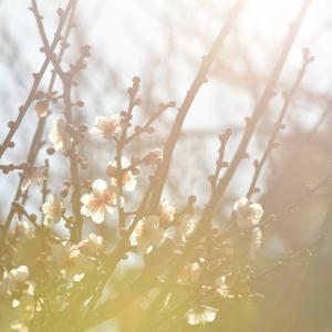 早春の光2021.1.20