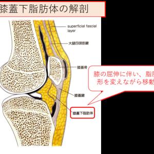 膝蓋下脂肪体と膝の疼痛について