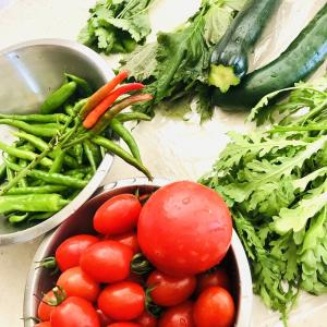 まだ食べられそうな庭野菜