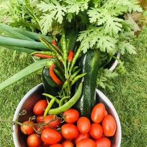 葉もの野菜の虫と周囲の除草
