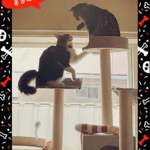 コロナ禍のGWと猫