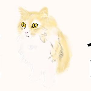 【これから猫飼う人必見!】トイレってどんな感じですか?