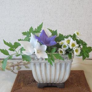 庭の花 桔梗青 夏菊白 モヒートミント 風船カズラ