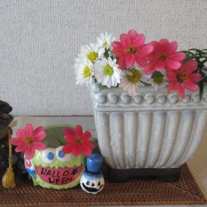 ピンクのジニア ローズマリーの花 夏菊白 ハロウィン