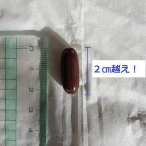 小西統合医療内科診察(4回目)
