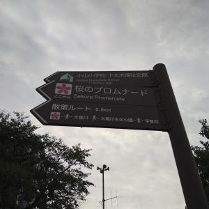 流山おおたかの森東口「桜のプロムナード」