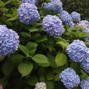 4月、5月に見つけた花