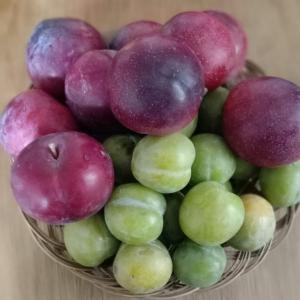 またもや失敗!旬が過ぎていく果物や野菜の食べおさめるタイミング。