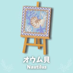 オウム貝 [Nautilus]