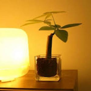 アロマランプを使い部屋を快適な香りにする方法!オススメ商品の紹介