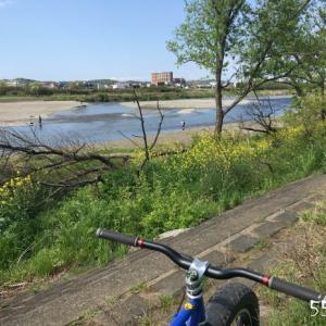 多摩川。菜の花。自転車。子どもに人気。