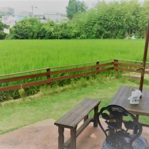 緑が綺麗過ぎる!箕面の隠れ家カフェに行ってみた…風゜輪(プリン)さん!