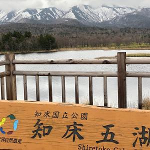 清楚な水芭蕉の群生が美しい知床五湖を散策