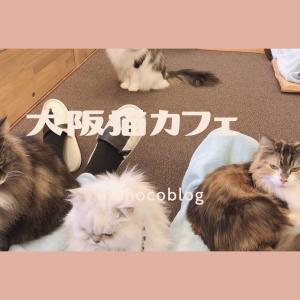 【大阪ヒザ乗り猫カフェ】Cat tailにいってみたらハマりました♡
