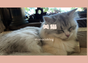 【福岡猫カフェ】美猫に行ったら本当に美しかった♡