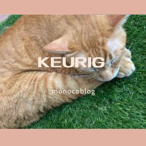 【福岡天神猫カフェ】Keurig天神2号店行きました♪街中猫カフェ