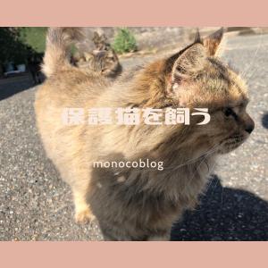 【猫を飼いたい】保護猫譲渡 里親までの道のりを詳しく解説♡福岡で里親になるには
