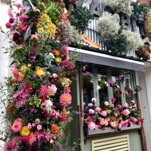 英国最古の花の祭典~チェルシーフラワーショー(RHS Chelsea Flower Show)~