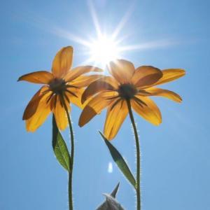 溢れる透明感が欲しいなら♡ラ ロッシュ ポゼの人気日焼け止め下地におまかせ!