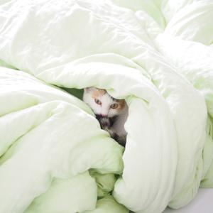 冬の朝、寒くて起きられないあなたへ。起きる30分前に暖房を入れてみたらどうですか?