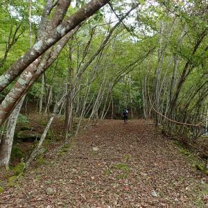 山梨県 北杜市 桑の木沢渓谷4 桑の木滝