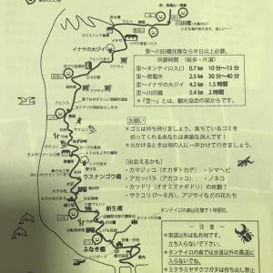 201907 東京都 御蔵島2 東側コース イナサの大ジイ
