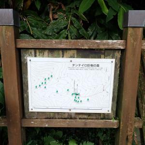 201907 東京都 御蔵島3 タンテイロの森