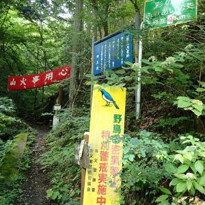 埼玉県 秩父市 野鳥の森の滝