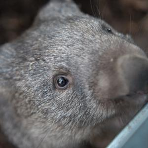 五月山動物園は入園無料!子連れで楽しむための見どころや注意点を紹介