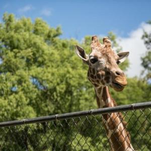 【保存版】子連れ動物園の持ち物チェックリスト 初めてでもコレで安心!