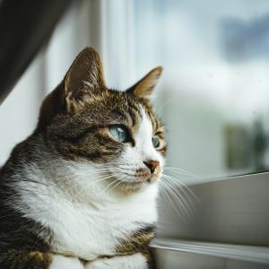 猫っ毛の人はハゲやすいのか