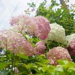 小さな庭の花たち